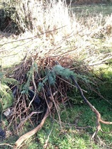 Green waste removal and brush clearing