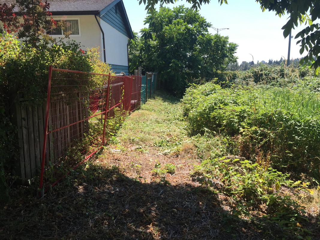 Coquitlam brush clearing and removal